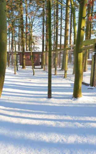 hundepension-gehege-betreuung-winter-hundetraining-elbnasen